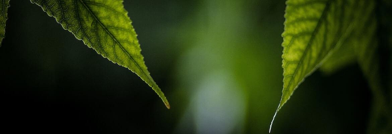 tratamiento adicion al cannabis